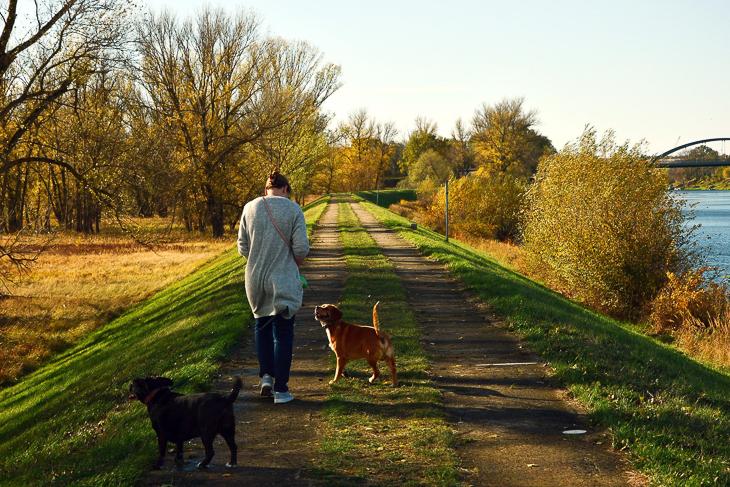 Nur eines von vielen Hilfsangeboten derzeit: Mit dem Hund Gassi gehen. (Foto: pixabay)